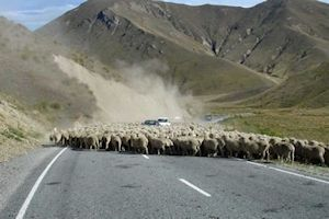 Traffic jam, North Island